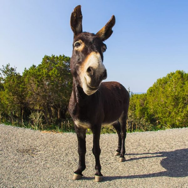 Farm4Trade-Donkey an ancient asset for today and tomorrow