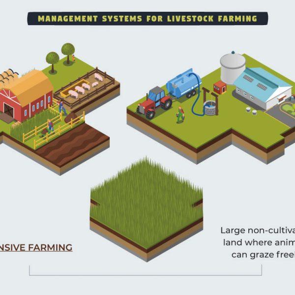 Farm4Trade-Management-systems-for-livestock-farming