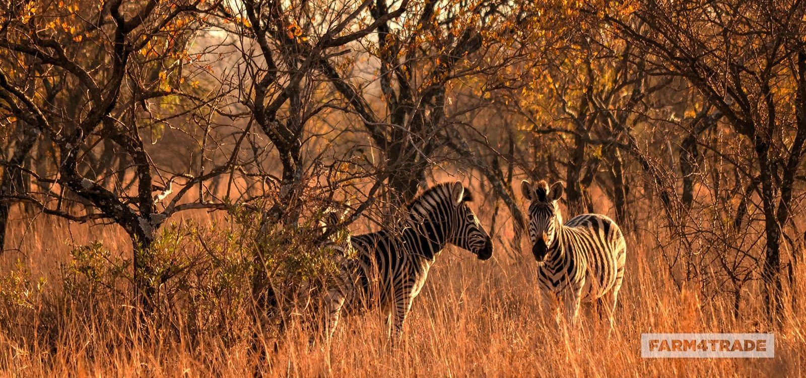 Trophy-hunting-a-controversial-practice-Farm4Trade