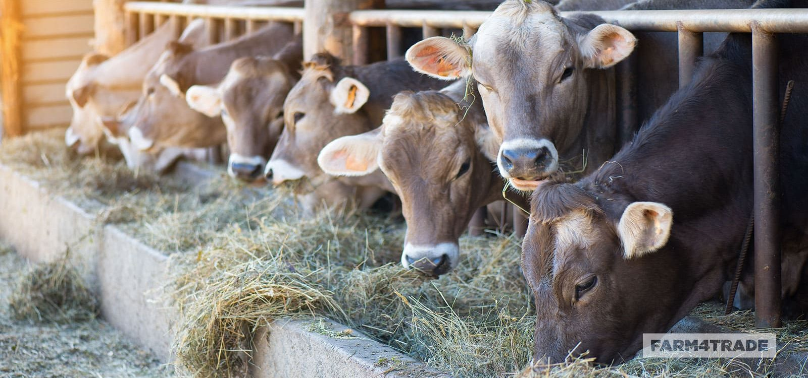 Farm4Trade-Balanced-diet-laboratory-analysis