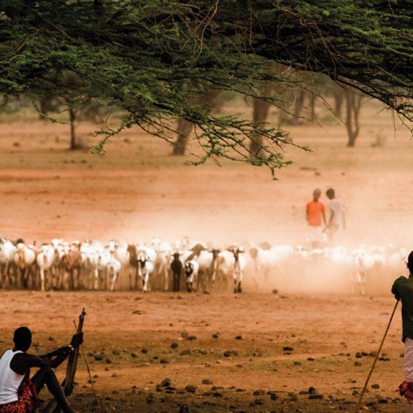 Goat-Breeding-the-four-main-types