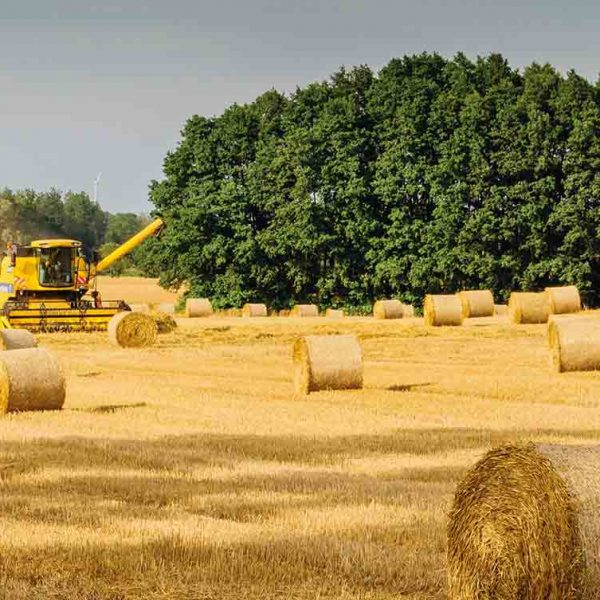 agro-industrial-by-products