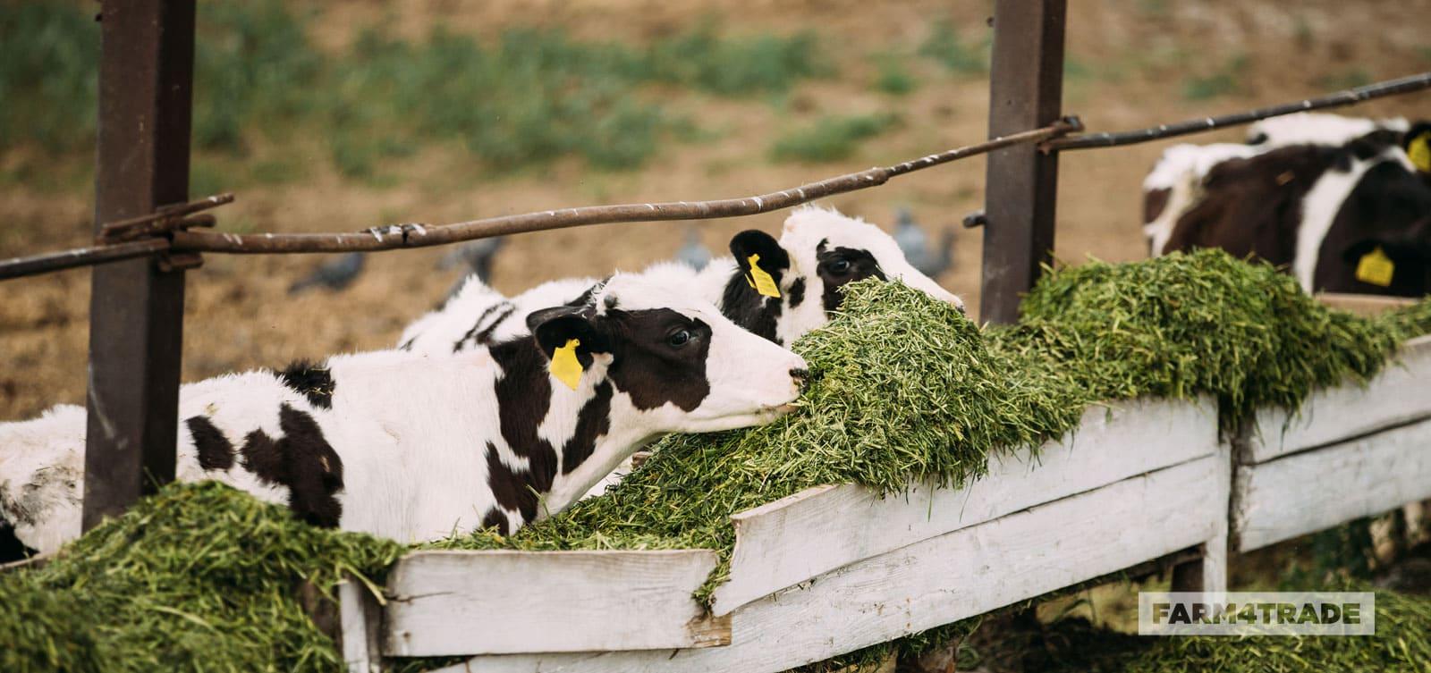 Understanding-anti-nutritional-factors-in-animal-feeds