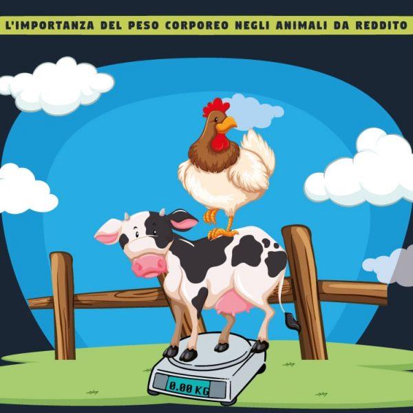 importanza del peso corporeo negli animali da reddito