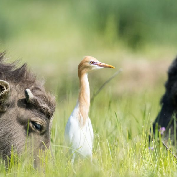 farming wild animals