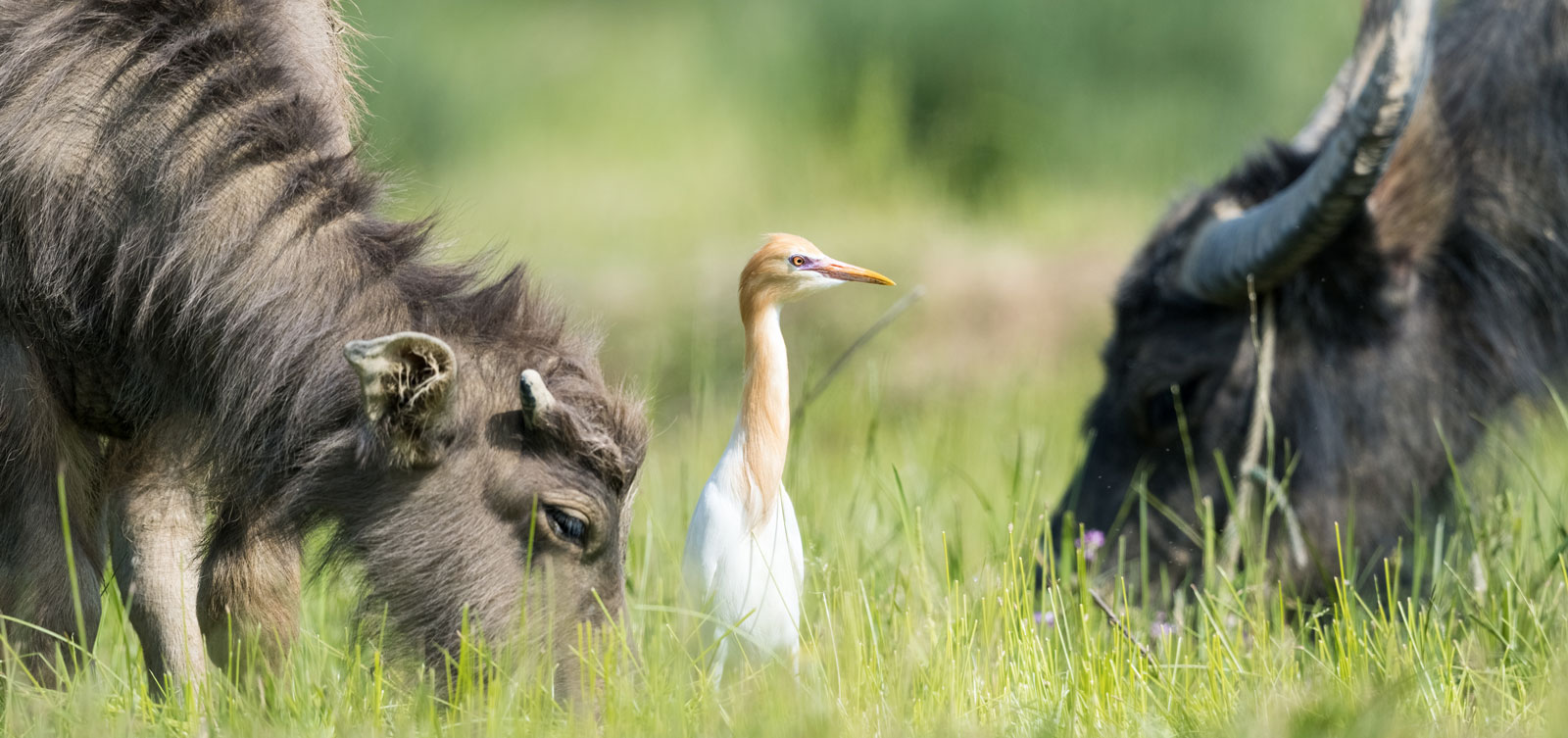 wildlife-farming