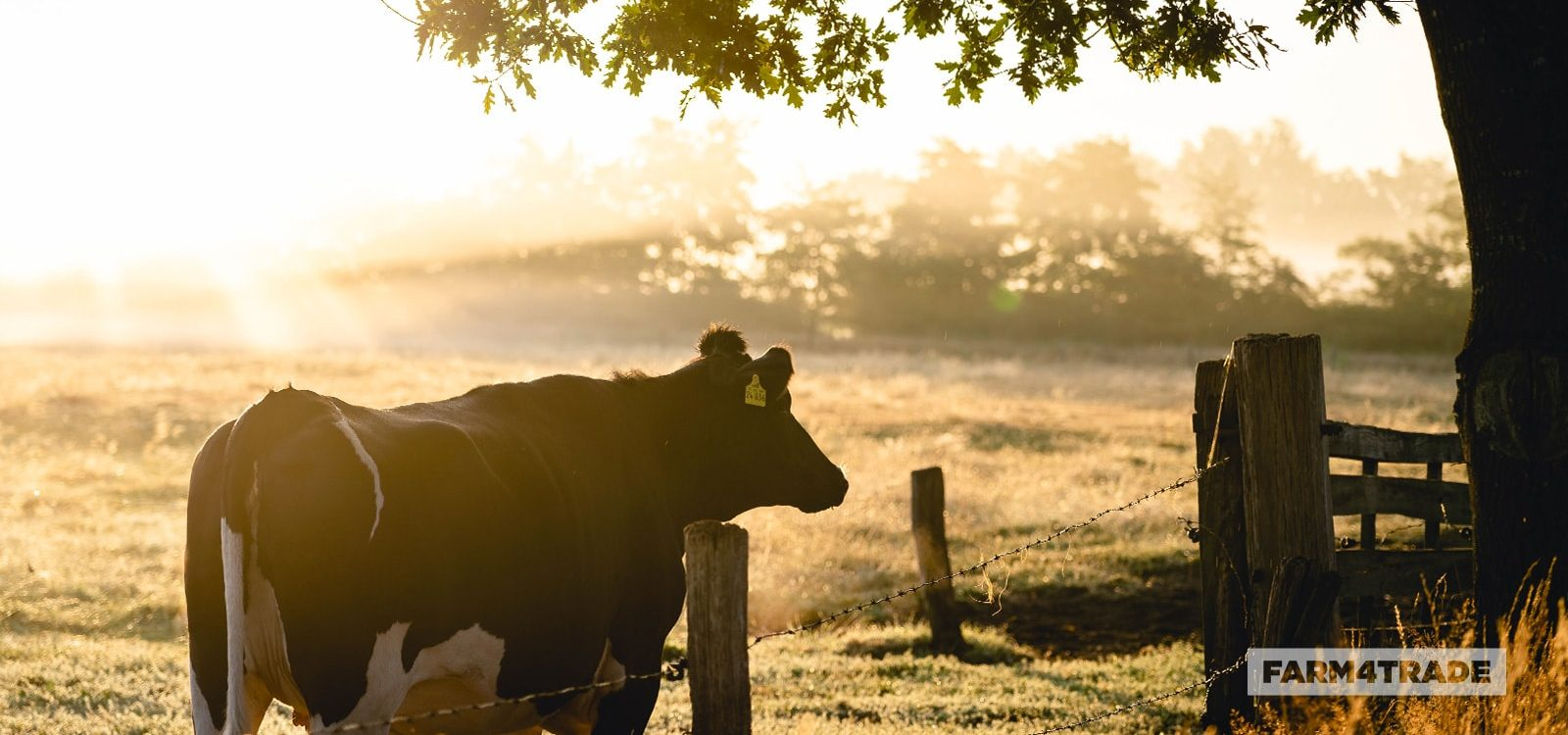 Farm4Trade-management techniques to reduce heat stress in livestock