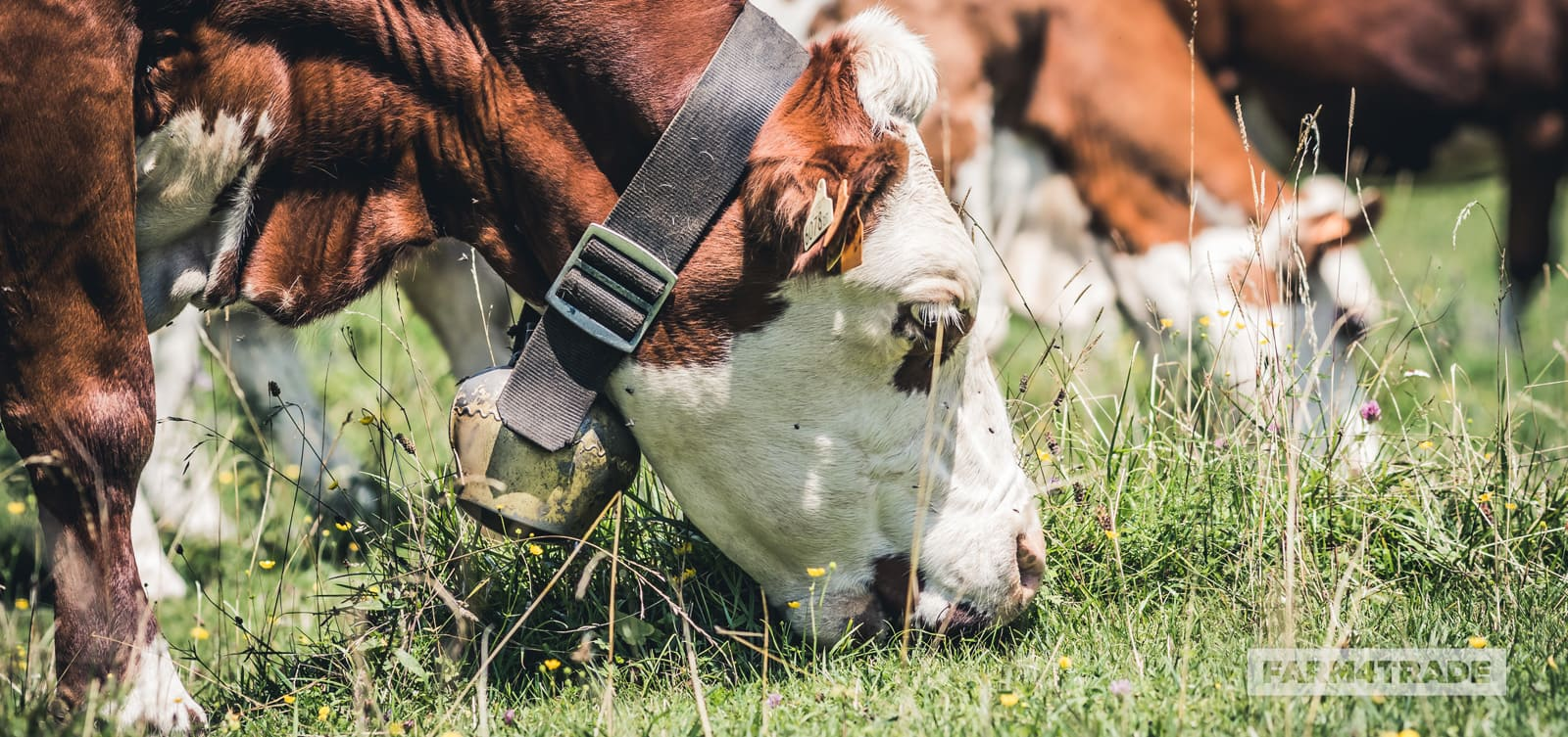 Farm4Trade-methods of estimating forage intake of grazing animals.