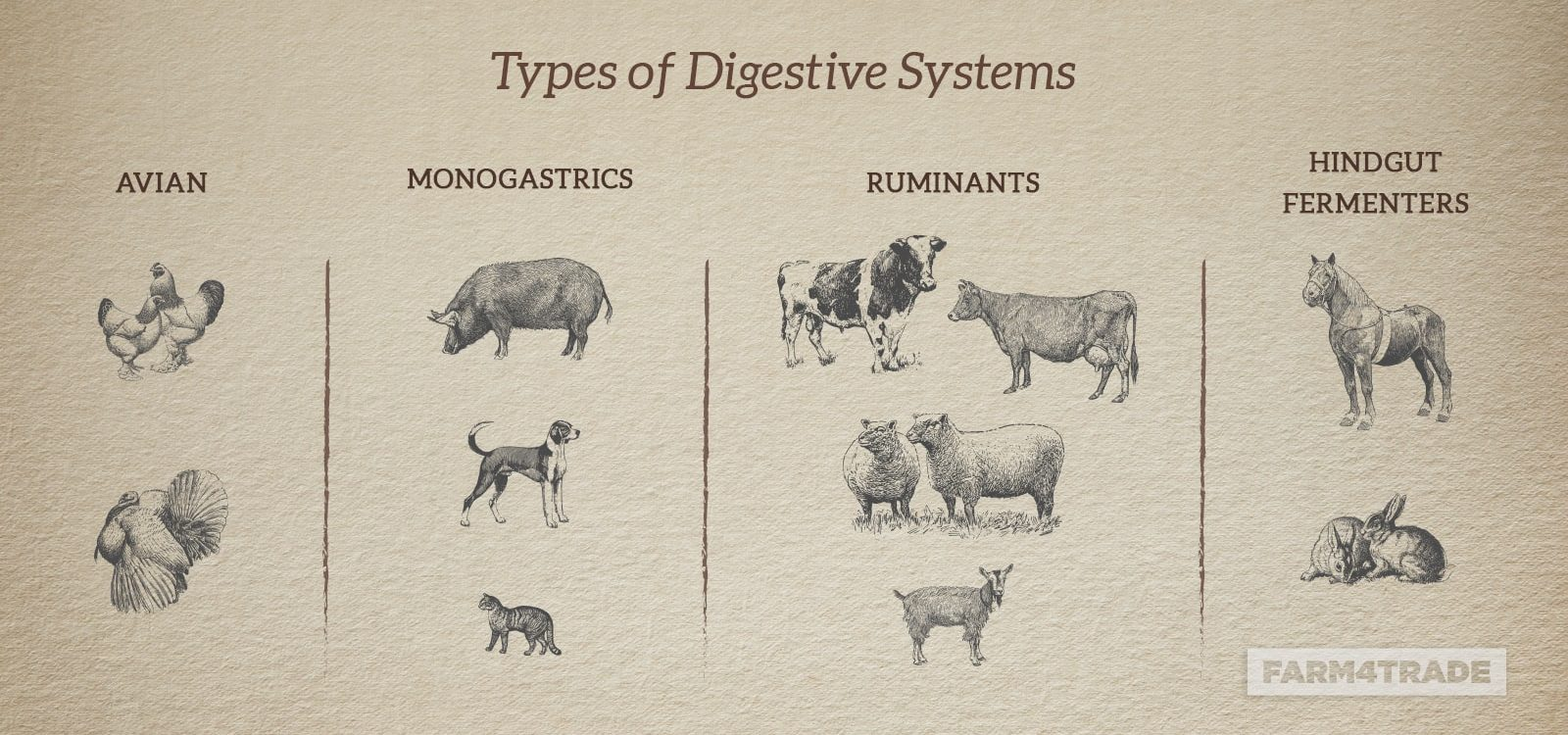 The importance of understanding animals digestive process-Farm4Trade