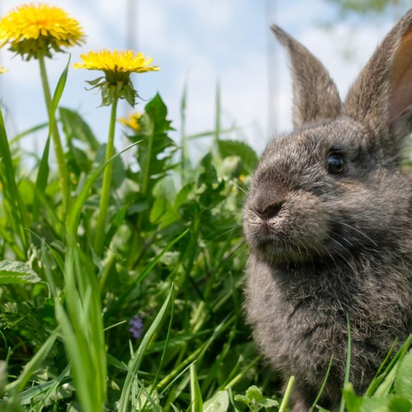 10 reasons to start raising rabbits-Farm4Trade