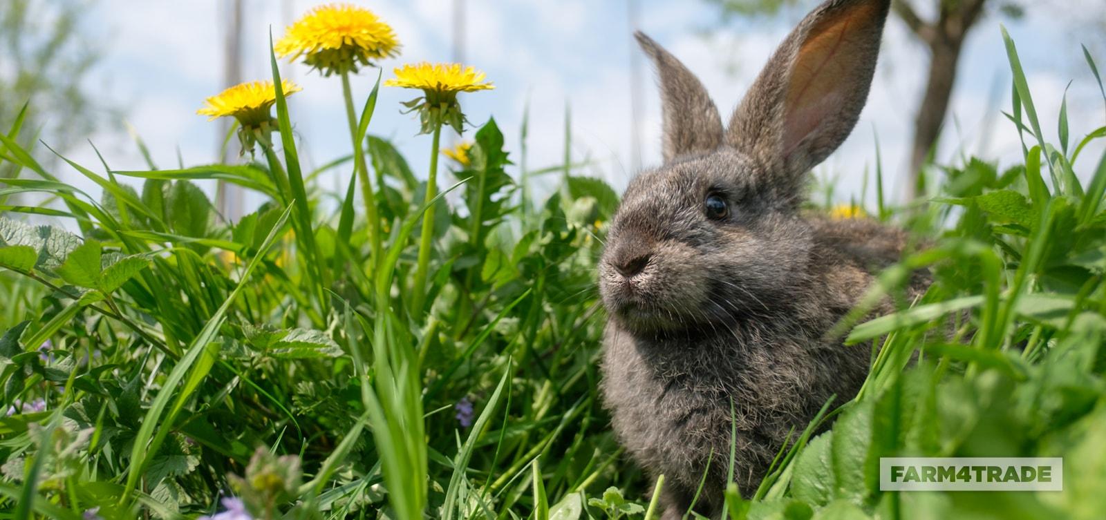 10 reasons to start raising rabbits-Farm4Trade
