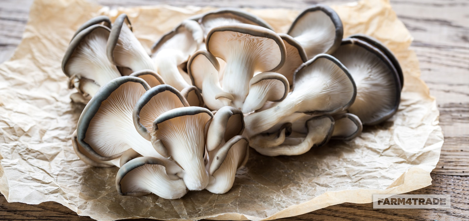 Production of oyster mushroom using agricultural wastes-Farm4Trade