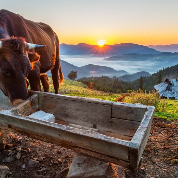 Farm4Trade-keep water troughs clean for healthier animals