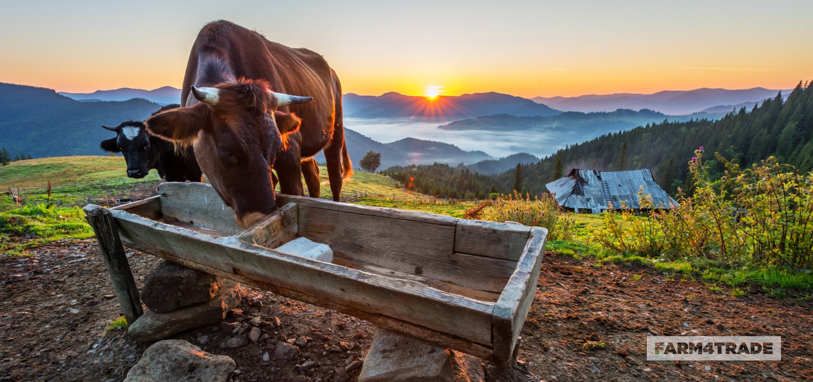 Farm4Trade-keep water troughs clean for healthier animals