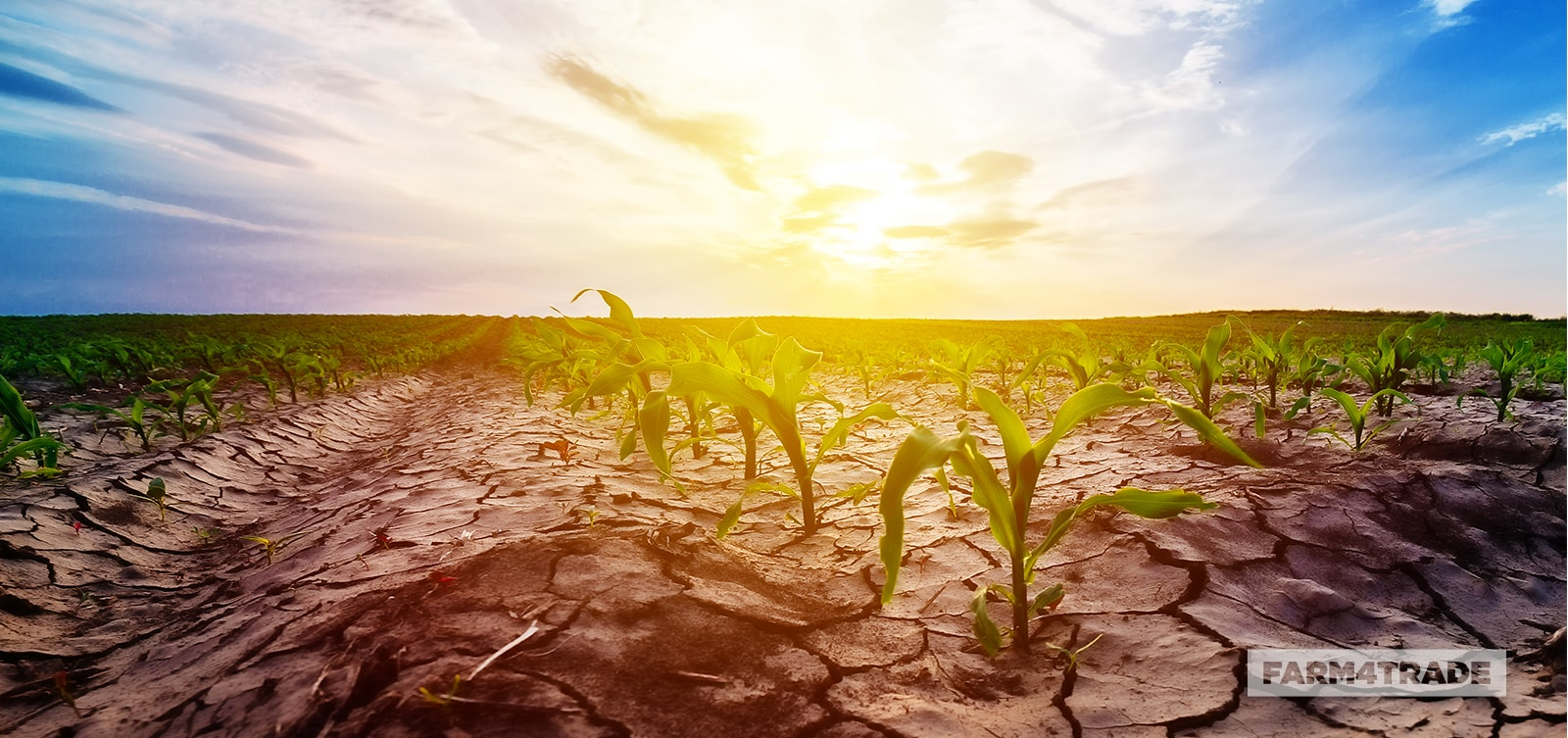 Farm4Trade-tips to prepare and survive drought