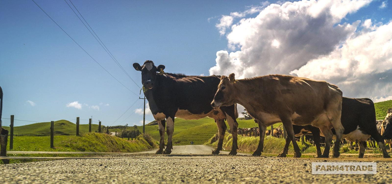 Farm4Trade Blog - Is coronavirus a threat for livestock animals?