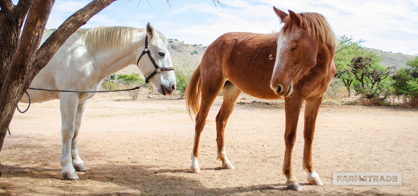 How to manage and avoid anthelmintic resistance in horses - Farm4Trade Blog