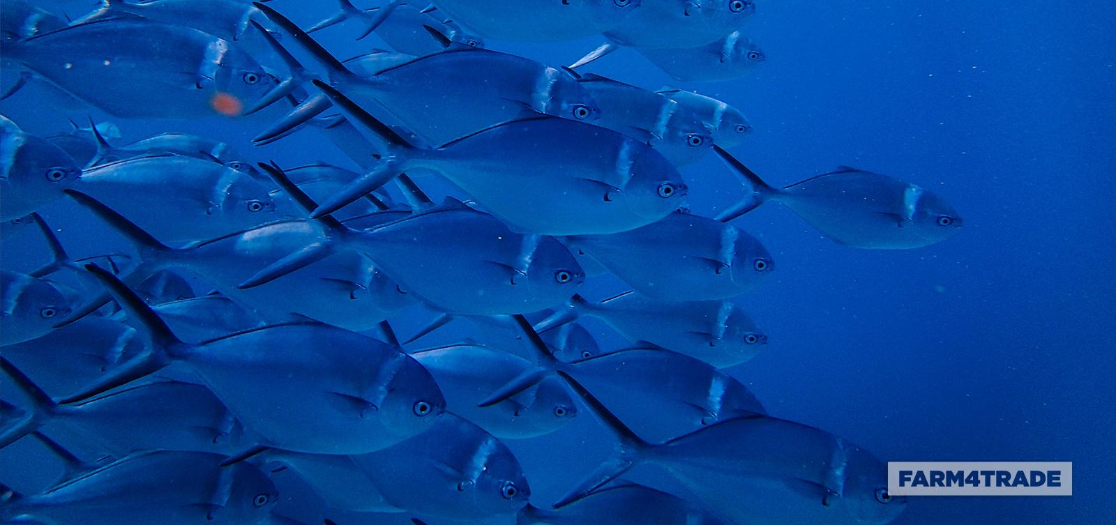Aquaculture a lucrative venture - Blog Farm4Trade