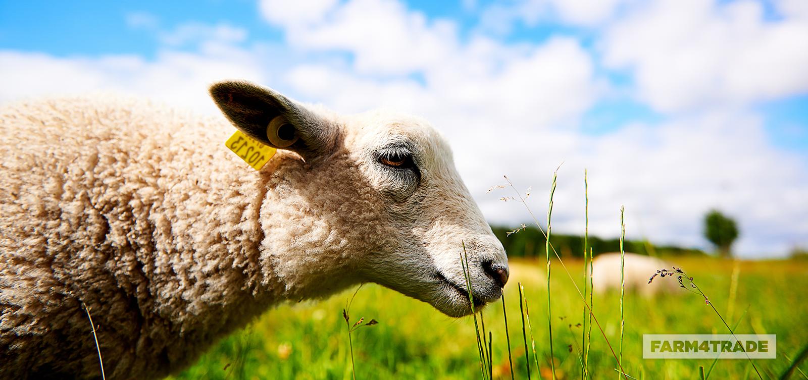 Different methods of animal identification - Blog Farm4Trade