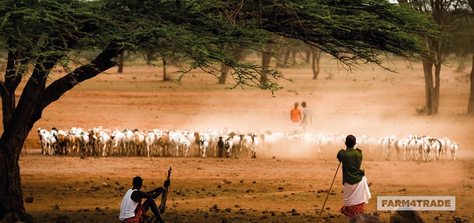 Farm4Trade-Goat-Breeding-the-four-main-types
