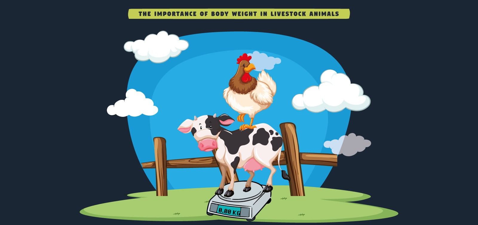 the-importance-of-body-weight-in-livestock-animals