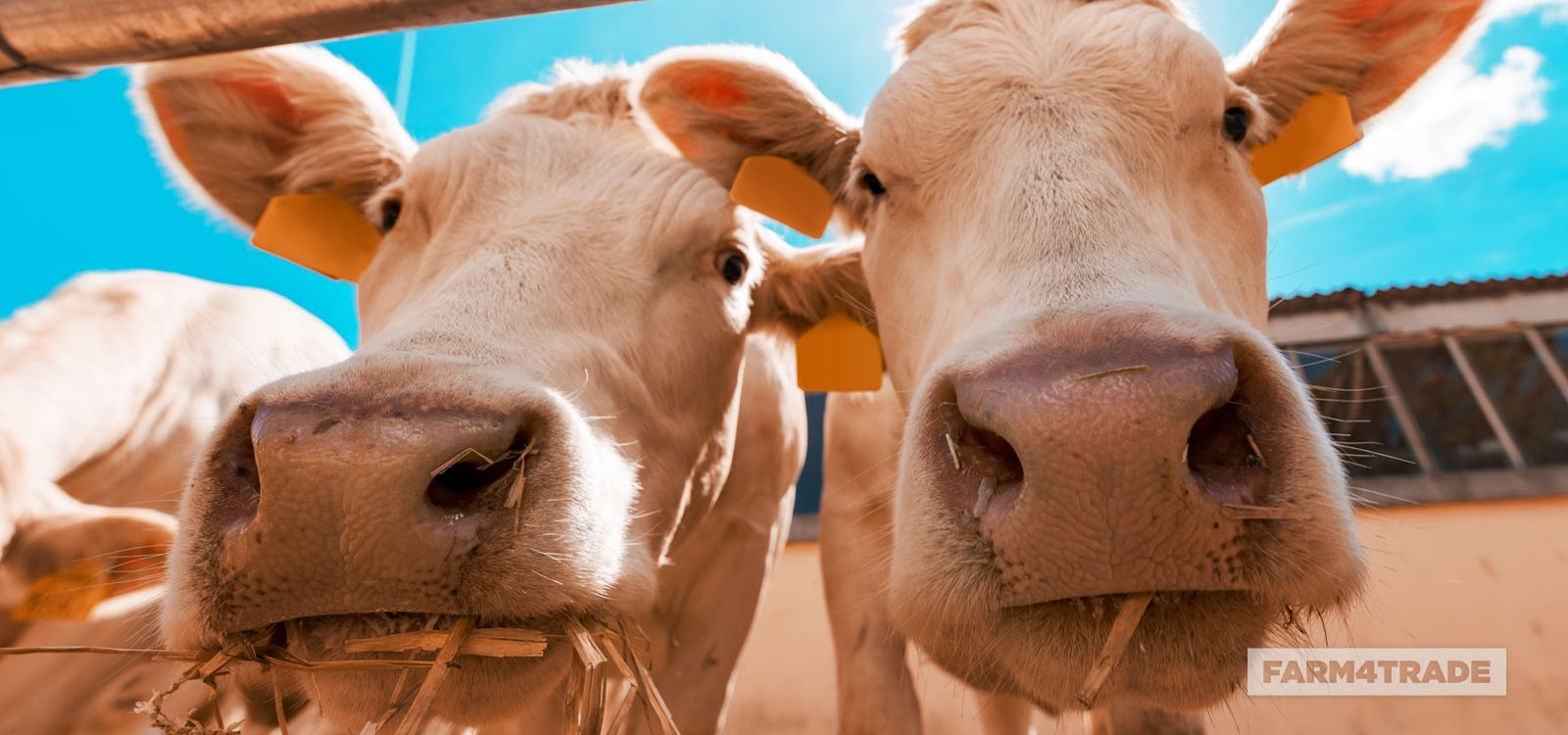 Farm4Trade-Feeding strategies in dairy cows during heat stress conditions