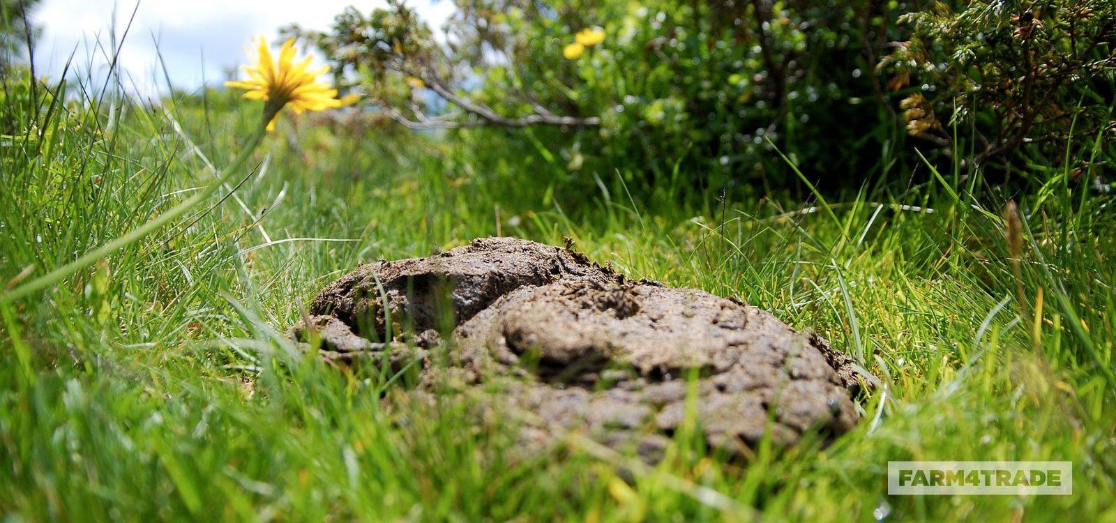 Farm4Trade-dung-analysis-determine-quality-of-forage