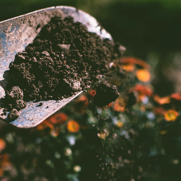 """Regenerative Agriculture: 3 """"C""""s for a better use of carbon in farming - Blog Farm4Trade"""