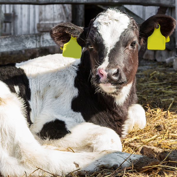 How to protect livestock from wildlife transmitted diseases